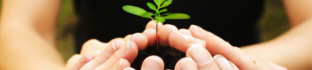 Nachhaltigkeit Titelbild